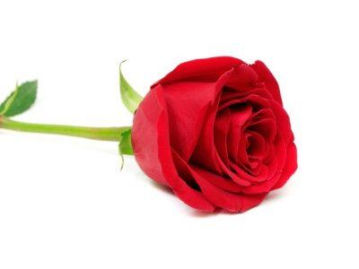 Per Sant Jordi, Vine A Casa Jordi I Emporta't Una Rosa De Regal